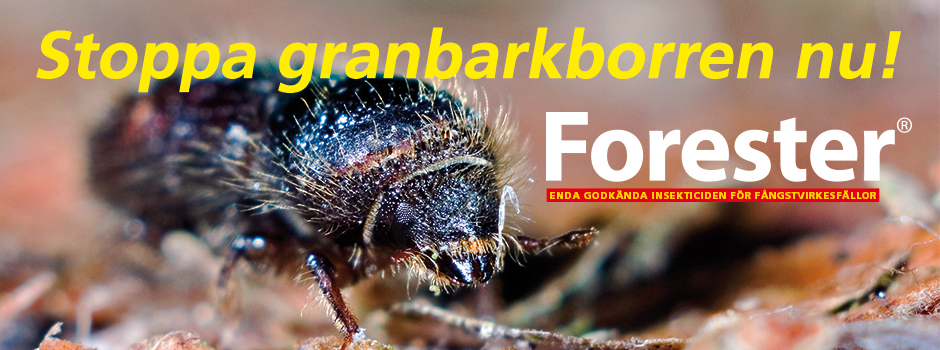 Granbarkborre-slider-1